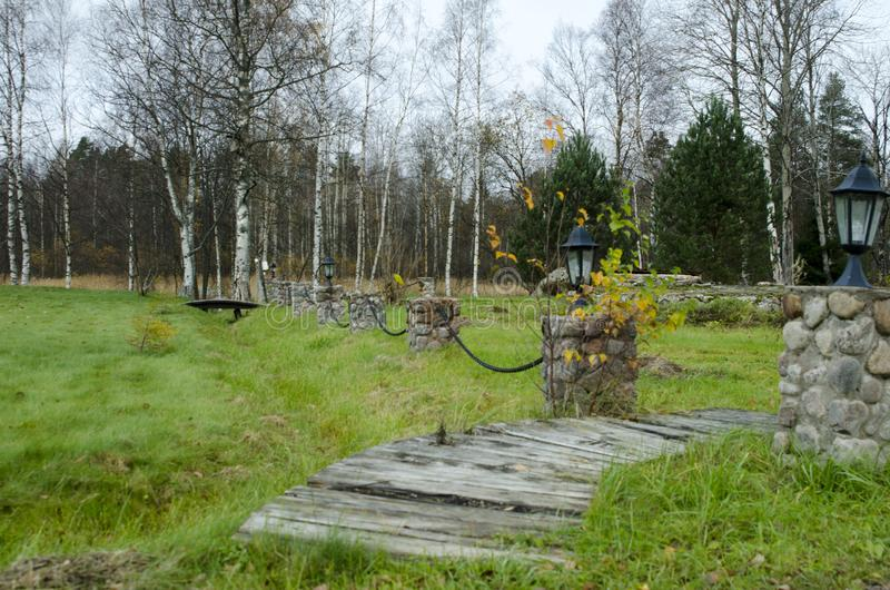 Omcirkelde bomen in het de herfstbos stock fotografie