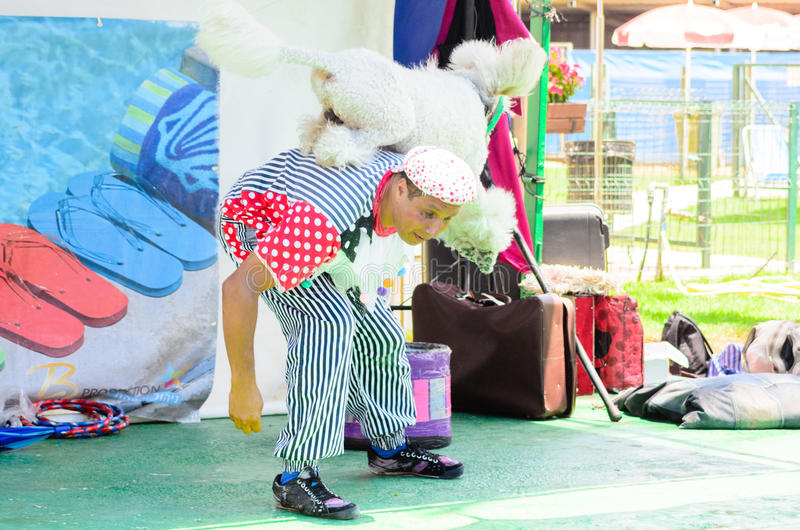 Omer (Beer-Sheva), ISRAEL -White Poodle jumping over the back of the clown on a summer area, July 25, 2015 stock images