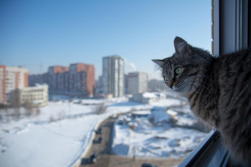 Omestic-Katze auf dem Balkon stockfoto