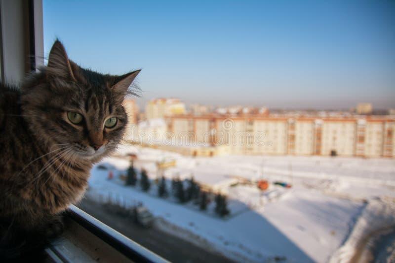 Omestic-Katze auf dem Balkon lizenzfreies stockbild