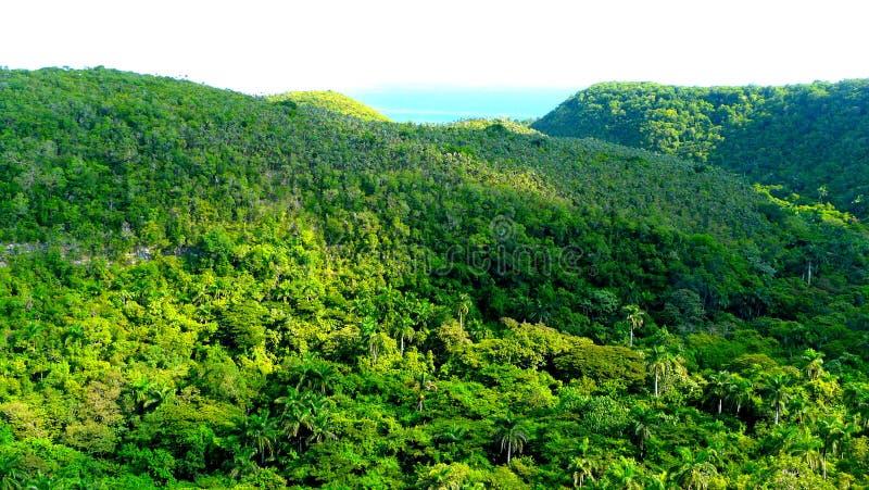 Omfattande kubansk djungel som beskådas från vägen som går från havannacigarr till Varadero royaltyfria foton