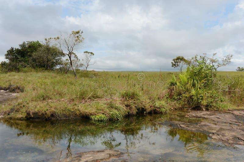 Omge floden Guayabero colombia arkivbild