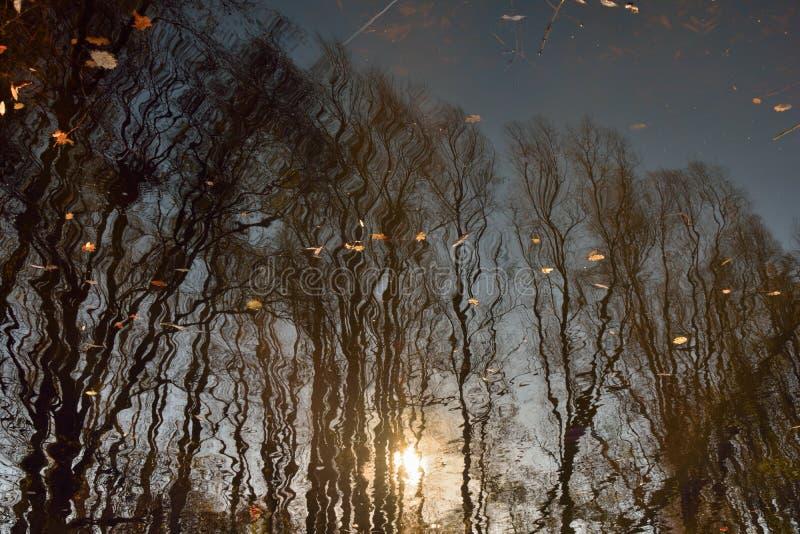 Omgekeerd beeldconcept: bomen en mooie zonsondergang in een rivier stock foto's