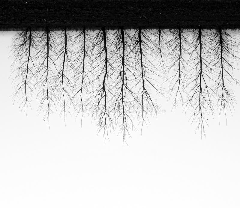 Omgekeerde bomen op een nevelige dag stock afbeeldingen