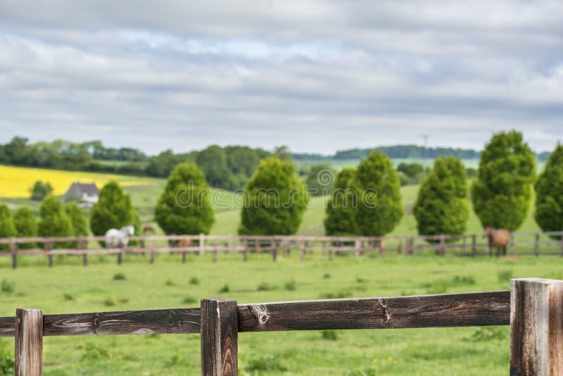 Omheining in een Engels landschap royalty-vrije stock foto's
