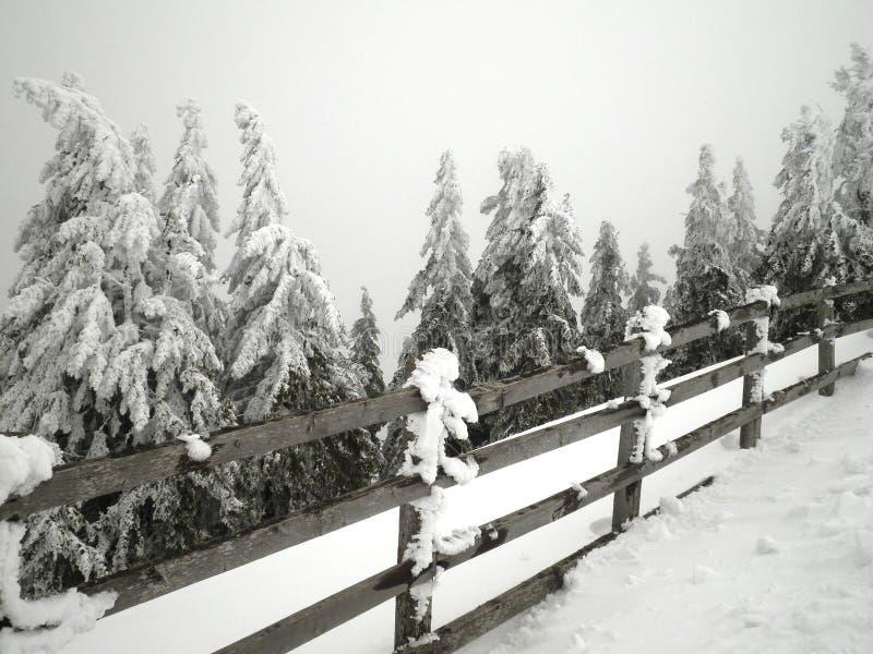 Omheining en Sneeuwbomen royalty-vrije stock afbeeldingen