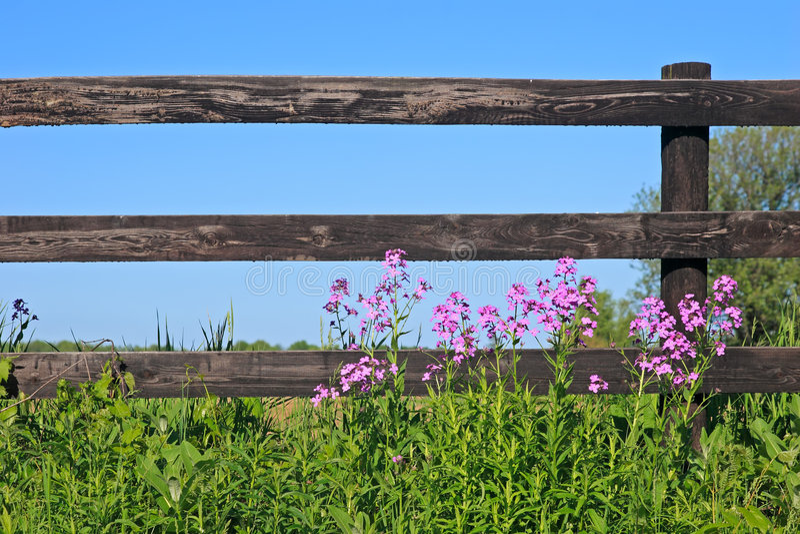 Omheining en wilde bloemen royalty-vrije stock foto's