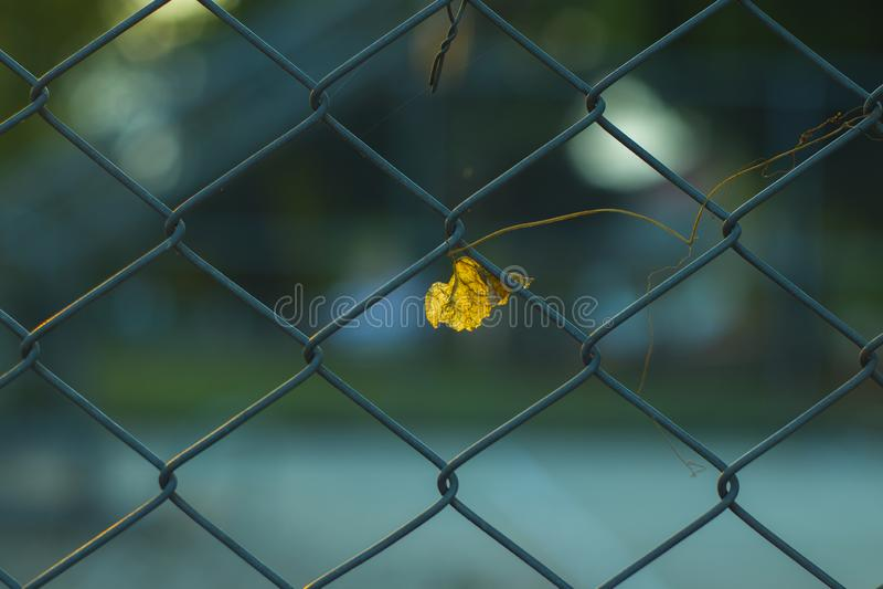 Omheining van getelegrafeerd die staal wordt gemaakt in vergiet met vaag landelijk voetbalgebied wordt ontworpen op achtergrond d royalty-vrije stock foto's