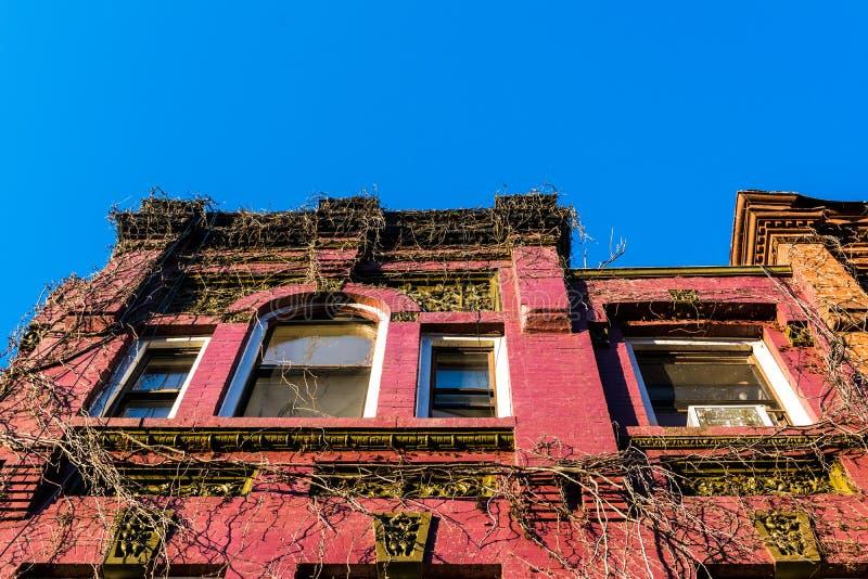 Omhoog bekijkend de wijnstok-behandelde voorgevel van een oud Harlem-brownstone gebouw, de Stad van Manhattan, New York, NY, de V royalty-vrije stock foto