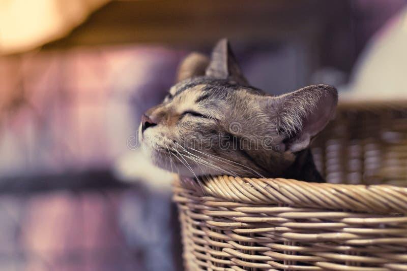 Omhoog dicht portret Weinig bruine Cat Sleeping In Basket-achtergrond royalty-vrije stock afbeeldingen