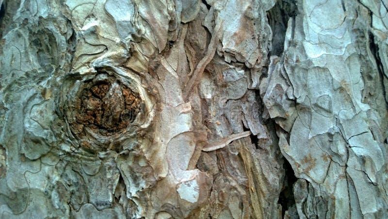 Omhoog dichte de schors van de tekeningsboom stock afbeeldingen