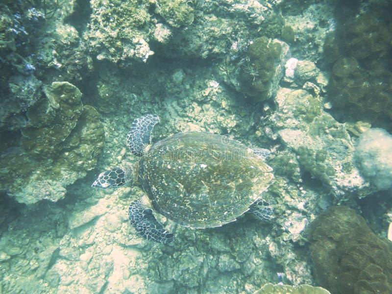 Omhoog gesloten de schildpad in andaman het noorden, Thailand royalty-vrije stock fotografie