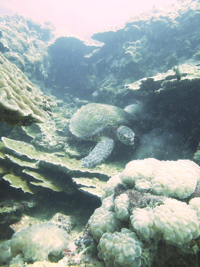 Omhoog gesloten de schildpad in Noord- andaman Thailand royalty-vrije stock afbeelding