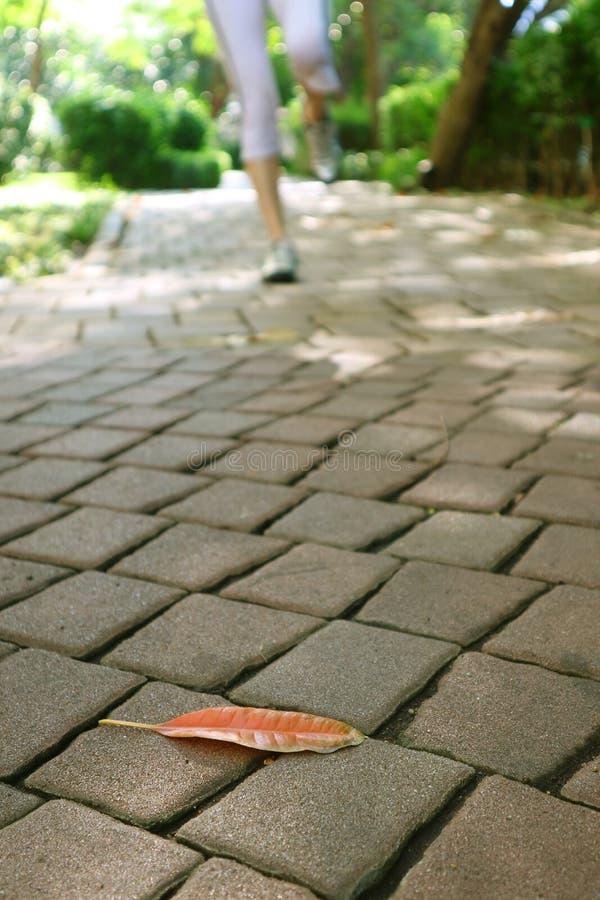 Omhoog gesloten een gevallen blad op de tuinweg met onscherp been van een joggingvrouw royalty-vrije stock foto's