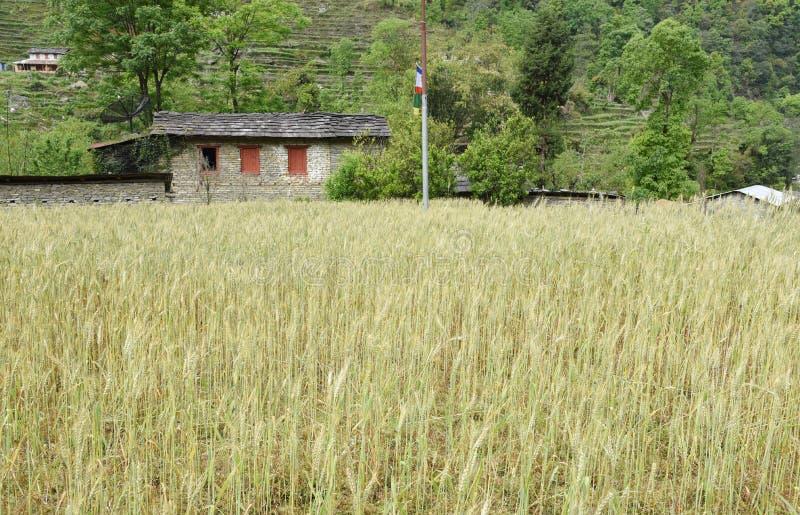 Omhoog gesloten het het gerstgebied en dorp in Nepal stock foto