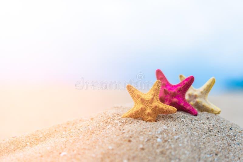 Omhoog gesloten op kleurrijke zeester mooie overzeese shells op de kust met blauwe hemelachtergrond Conceptuele vakantie en de zo stock afbeelding