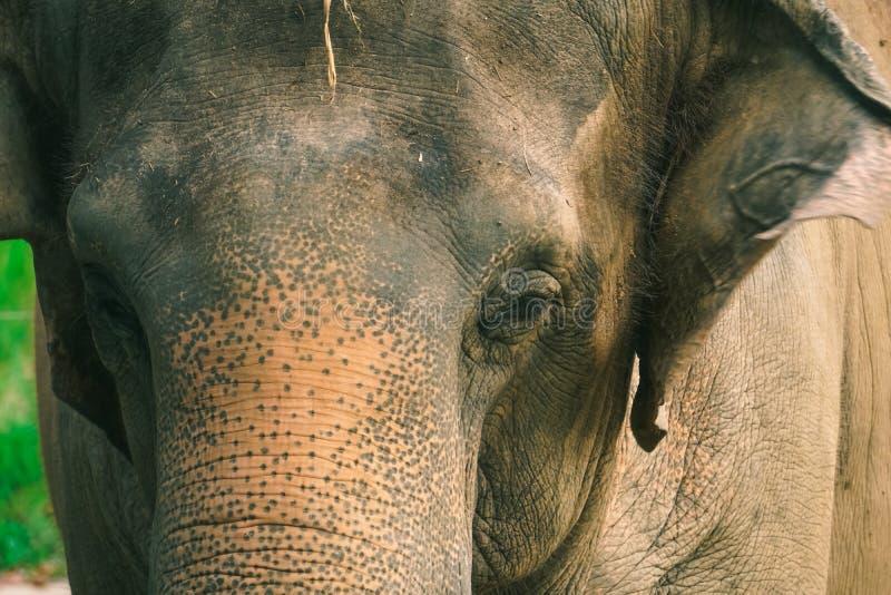 Omhoog gesloten potrait van olifant stock fotografie