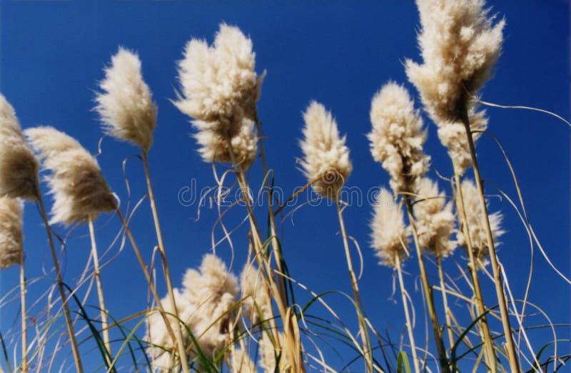 Omhoog Hoog met gras bedekken stock foto's