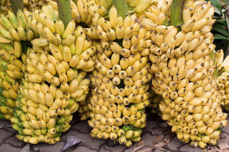 Omhoog sluiten de bos rijpe gele bananen, royalty-vrije stock foto