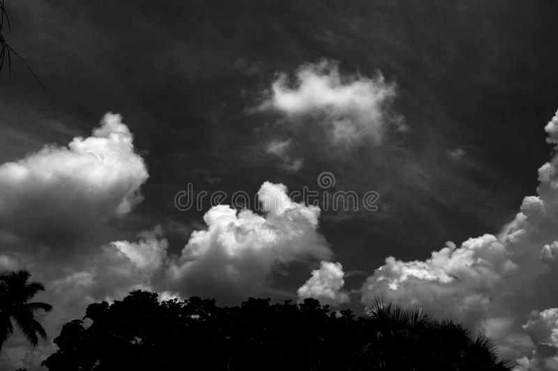 Ominous storm clouds forming over trees. Dramatic high contrast black and white image of ominous storm clouds forming over trees in tropical florida stock image