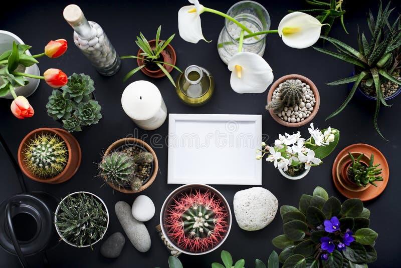 Omlijstingmodel Cactus, succulente installaties, tulpen, en decoratieve rotsen Mening van hierboven royalty-vrije stock afbeeldingen