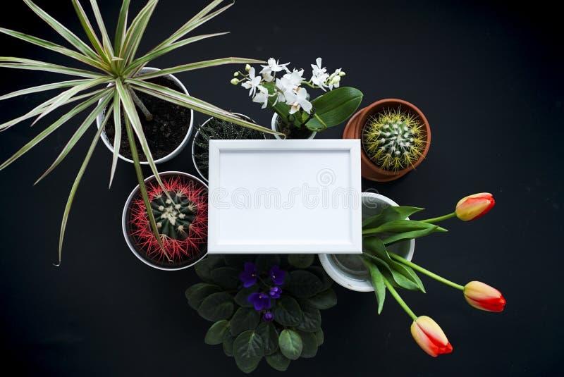 Omlijstingmodel Cactus, succulente installaties, tulpen, en decoratieve rotsen Mening van hierboven stock foto