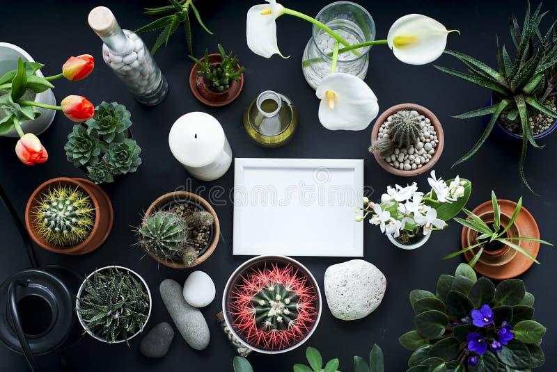 Omlijstingmodel Cactus, succulente installaties, tulpen, en decoratieve rotsen Mening van hierboven stock fotografie