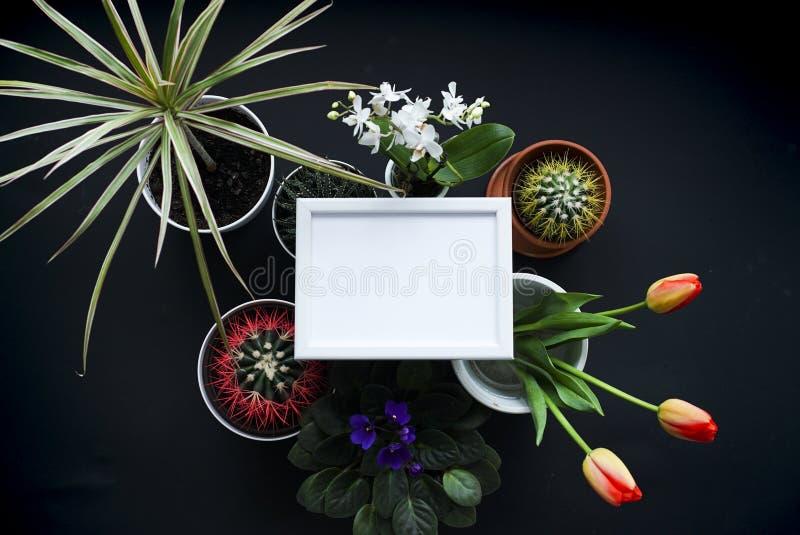 Omlijstingmodel Cactus, succulente installaties, tulpen, en decoratieve rotsen Mening van hierboven stock afbeelding