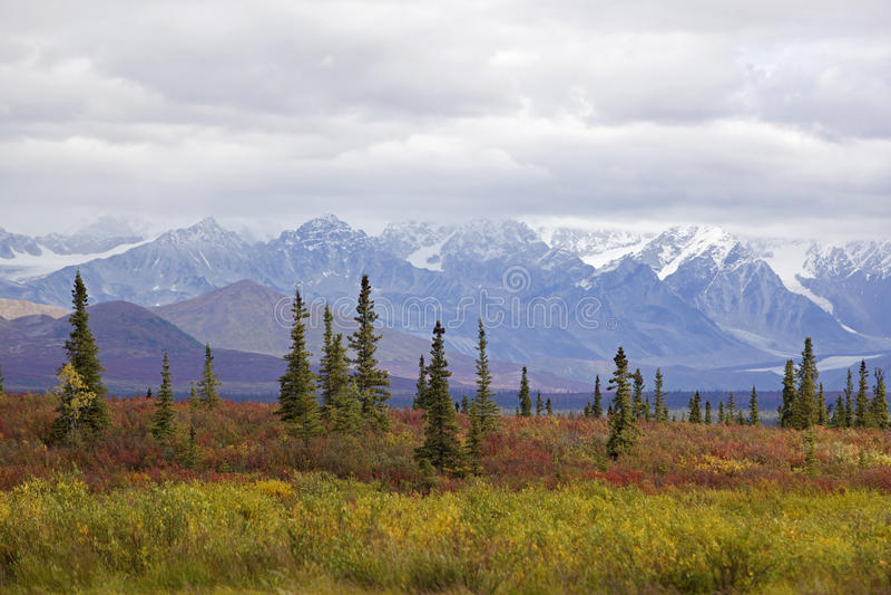 Omnibus de l'Alaska Denali en automne photographie stock