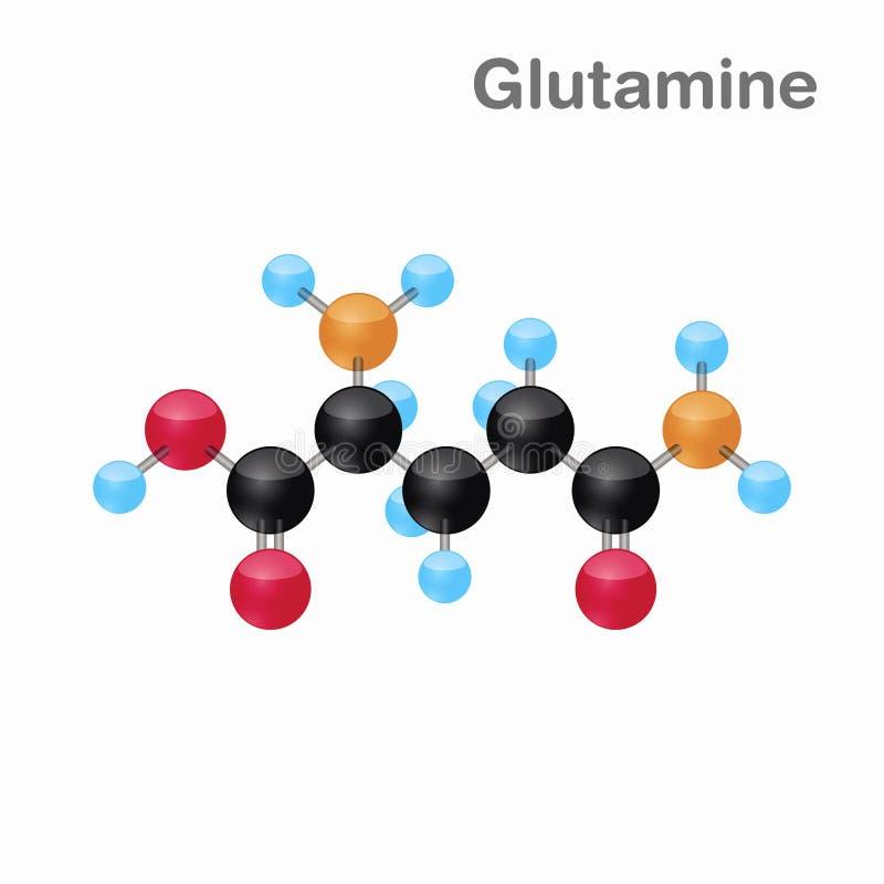Omposition y estructura moleculares de la glutamina, Gln, mejor para los libros y la educación ilustración del vector