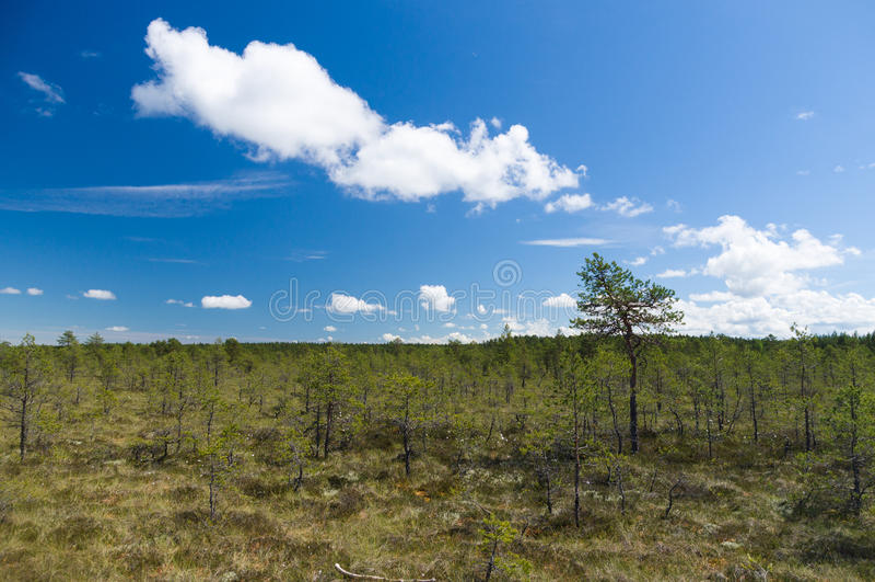 Område för Viru myrreserv under blå himmel arkivbilder