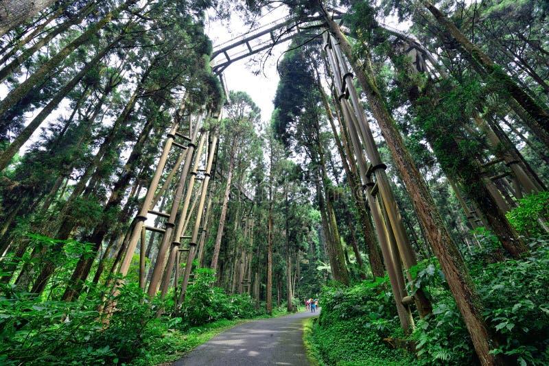 Område för Xitou naturutbildning, Taiwan arkivfoto