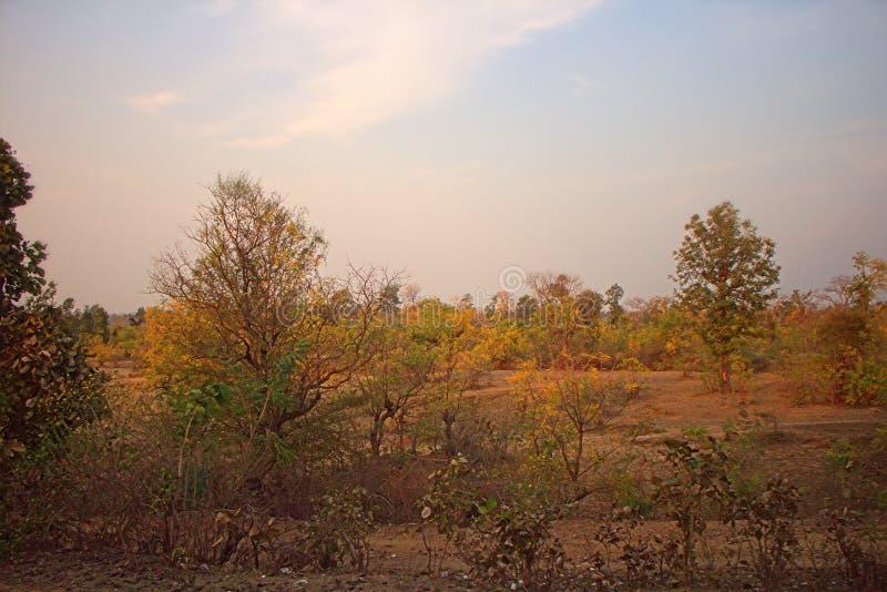 Område runt om Nagpur, Indien Torr utlöpare med fruktträdgårdar & x28; bondegardens& x29; royaltyfria bilder