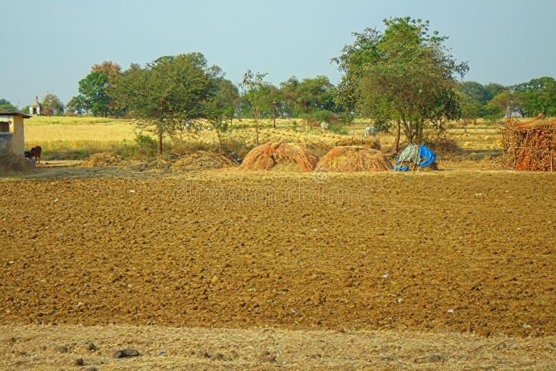 Område runt om Nagpur, Indien Torr utlöpare med fruktträdgårdbondeträdgårdar royaltyfri foto