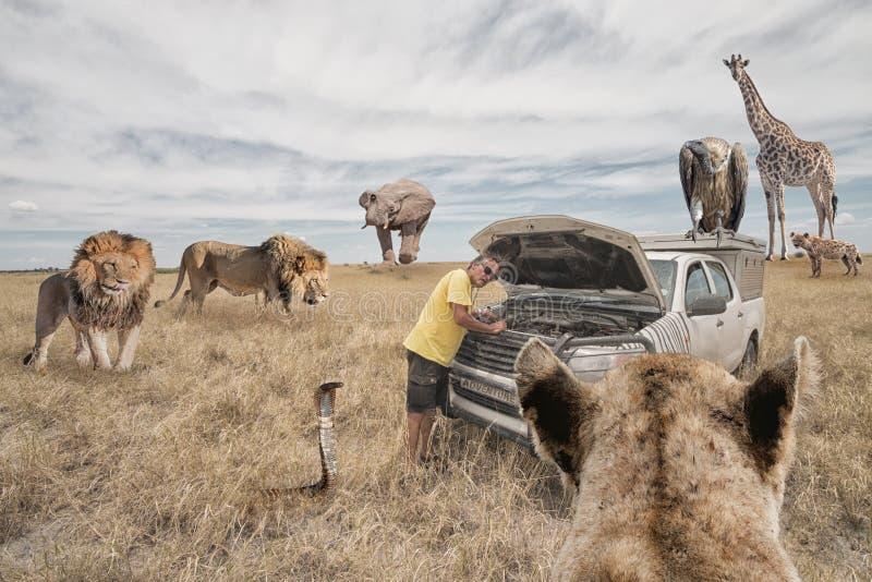 Omringat av vilda djur royaltyfria bilder
