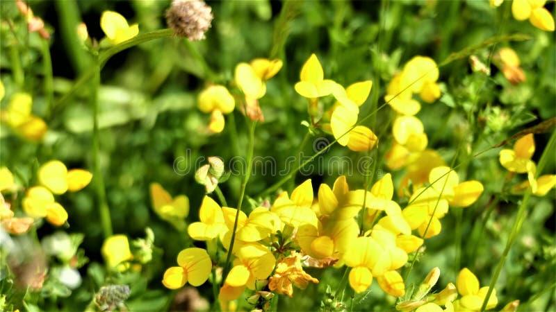 Omringd door de mooie schaduwen in geel royalty-vrije stock foto's