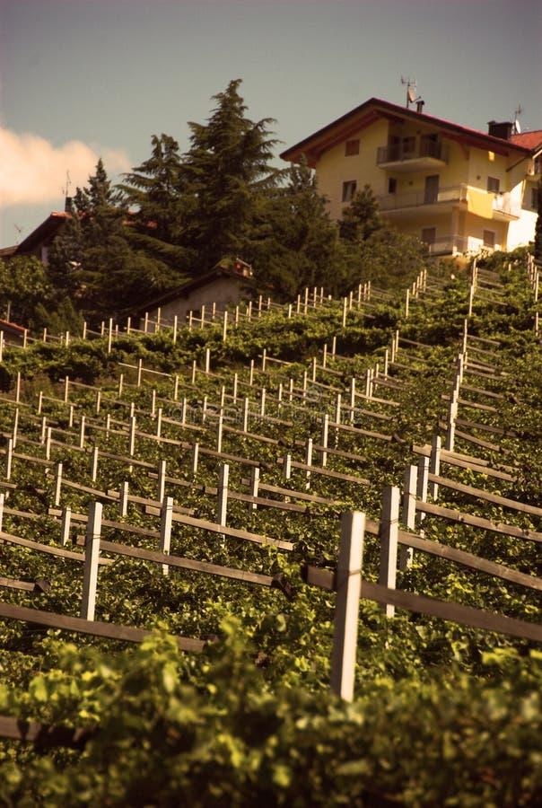 Omringd door wijngaarden stock fotografie