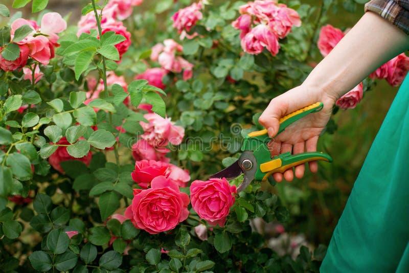 Omsorg av trädgården arkivbild
