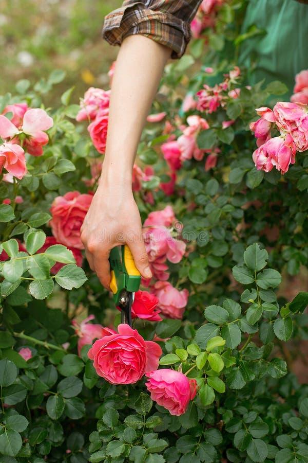 Omsorg av trädgården royaltyfri bild