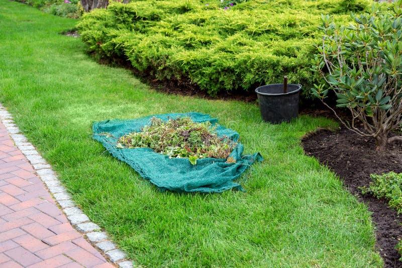 Omsorg av växter av att landskap med en gräsmatta och buskar royaltyfri fotografi