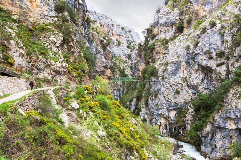 Omsorger för fotvandra slinga skuggar eller Ruta del Cares längs flodomsorger i molnig vår nära Cain, den Picos de Europa nationa royaltyfri foto