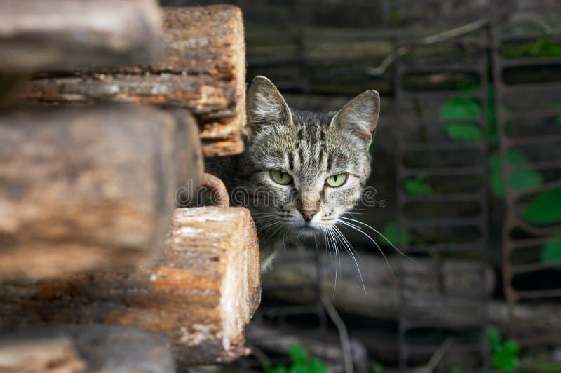 Omzichtige kat stock afbeeldingen