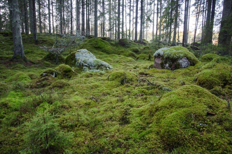 Onaangeroerde en bemoste bosgrond royalty-vrije stock fotografie