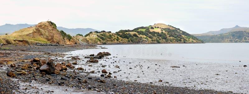 Onawe Paninsula Volcanic Plug, Akaroa Harbour, Nowa Zelandia zdjęcia stock