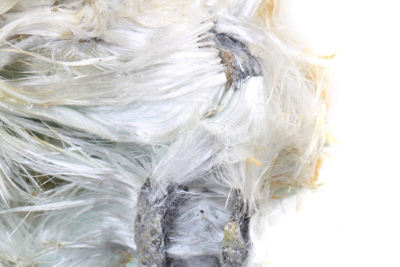 Onbekend asbestmineraal stock fotografie