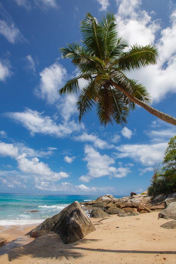 Onbeschadigd tropisch strand in Sri Lanka royalty-vrije stock afbeeldingen