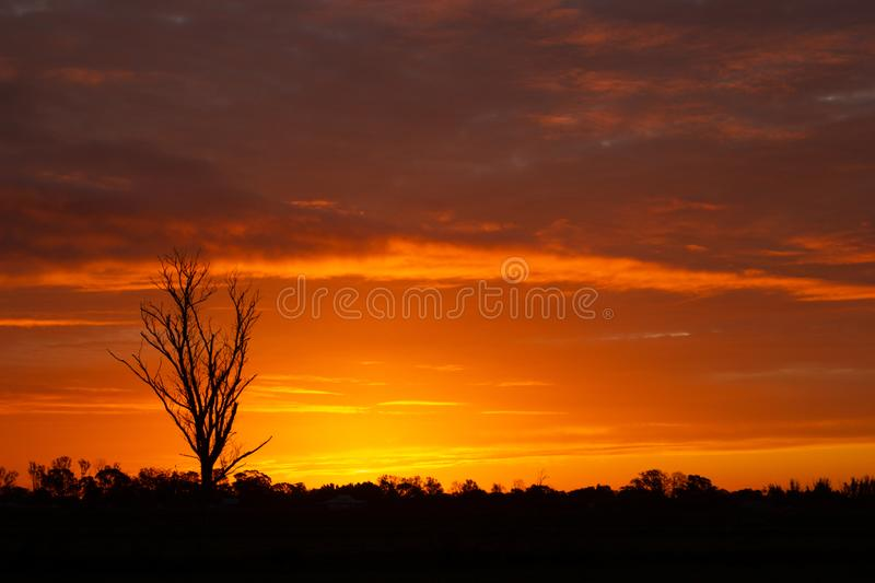 once in a life time sunset in Australia with sillhouettes of trees, Cobram, Victoria, Australia stock image