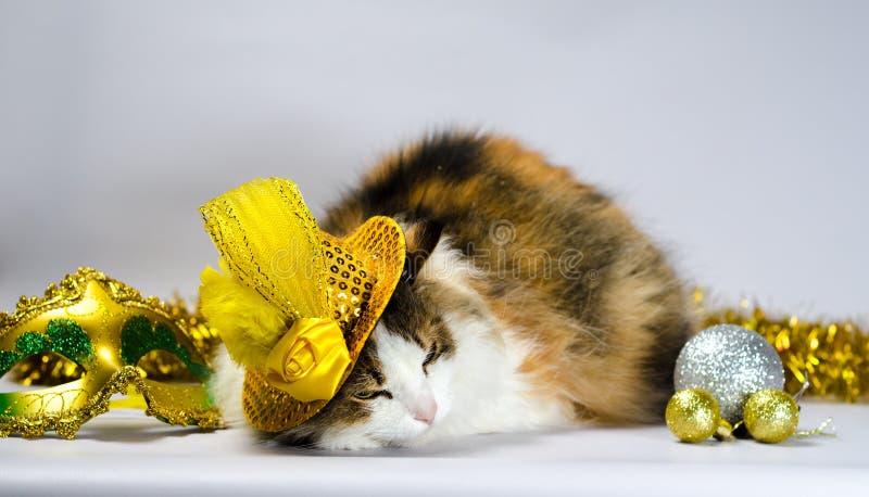 Ond katt i en gul karnevalhatt med paljetter och en fjäder n fotografering för bildbyråer