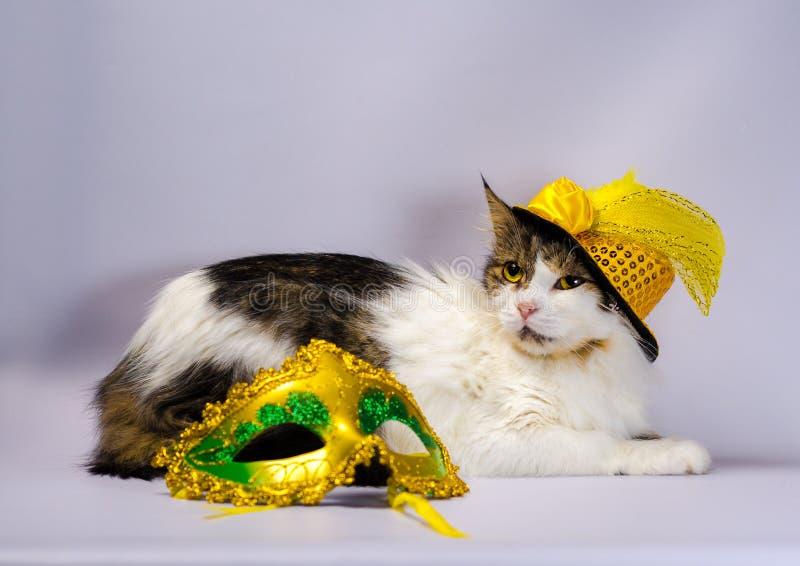 Ond katt i en gul karnevalhatt med paljetter och en fjäder n arkivfoton