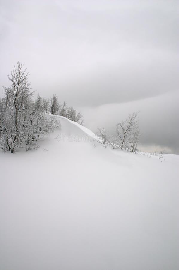 Onda da neve imagem de stock